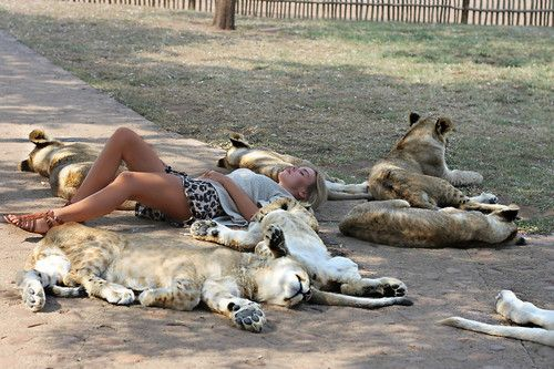Excuse me, miss. I BELIEVE YOU'RE SURROUNDED BY JUNGLE CATS.
