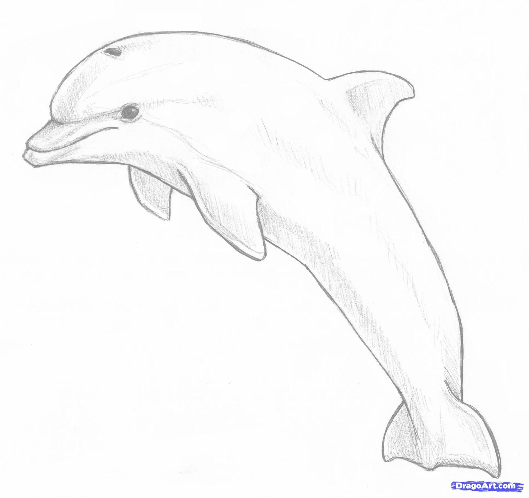 How To Draw A Jumping Dolphin Step 8