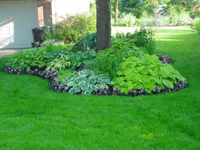For Ur Tree In The Back Hosta Surround Love This Idea