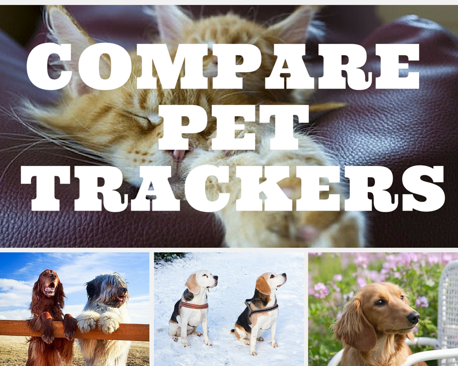 Compare Pet Trackers Dog dental cleaning, Pet tracker