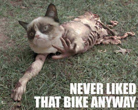 Grumpy Walker Kitty