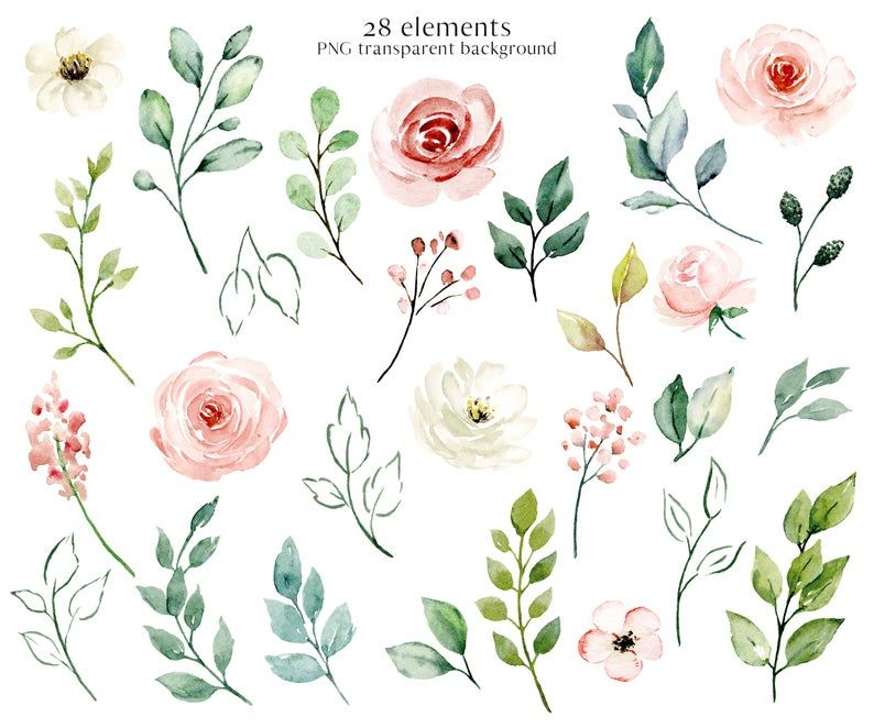 Watercolor Flowers Peach Roses Floral Clipart Set Aquarelle Flower And Leaf Png Files With Transparent Background Free Commercial Use Watercolor Flowers Peach Roses Clip Art