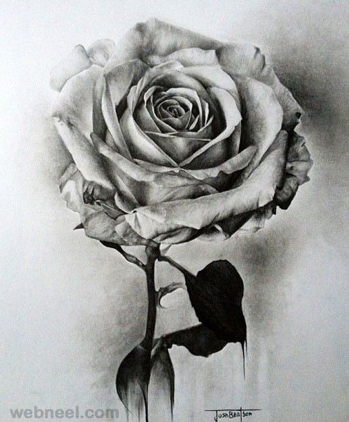 bleeding rose drawing | you can always paint the white roses with ...