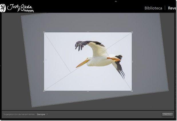 Fotografía para principiantes: Como mejorar la composición usando LR.