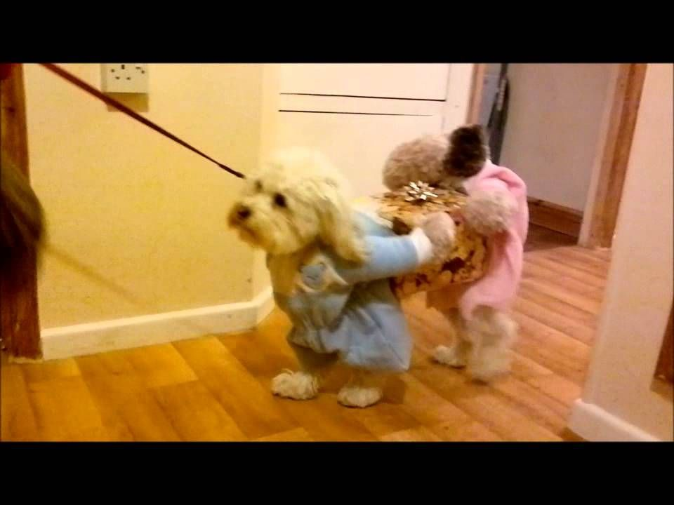 Funny Dog Costume Looks Like Two Dogs Carrying A Wrapped Present