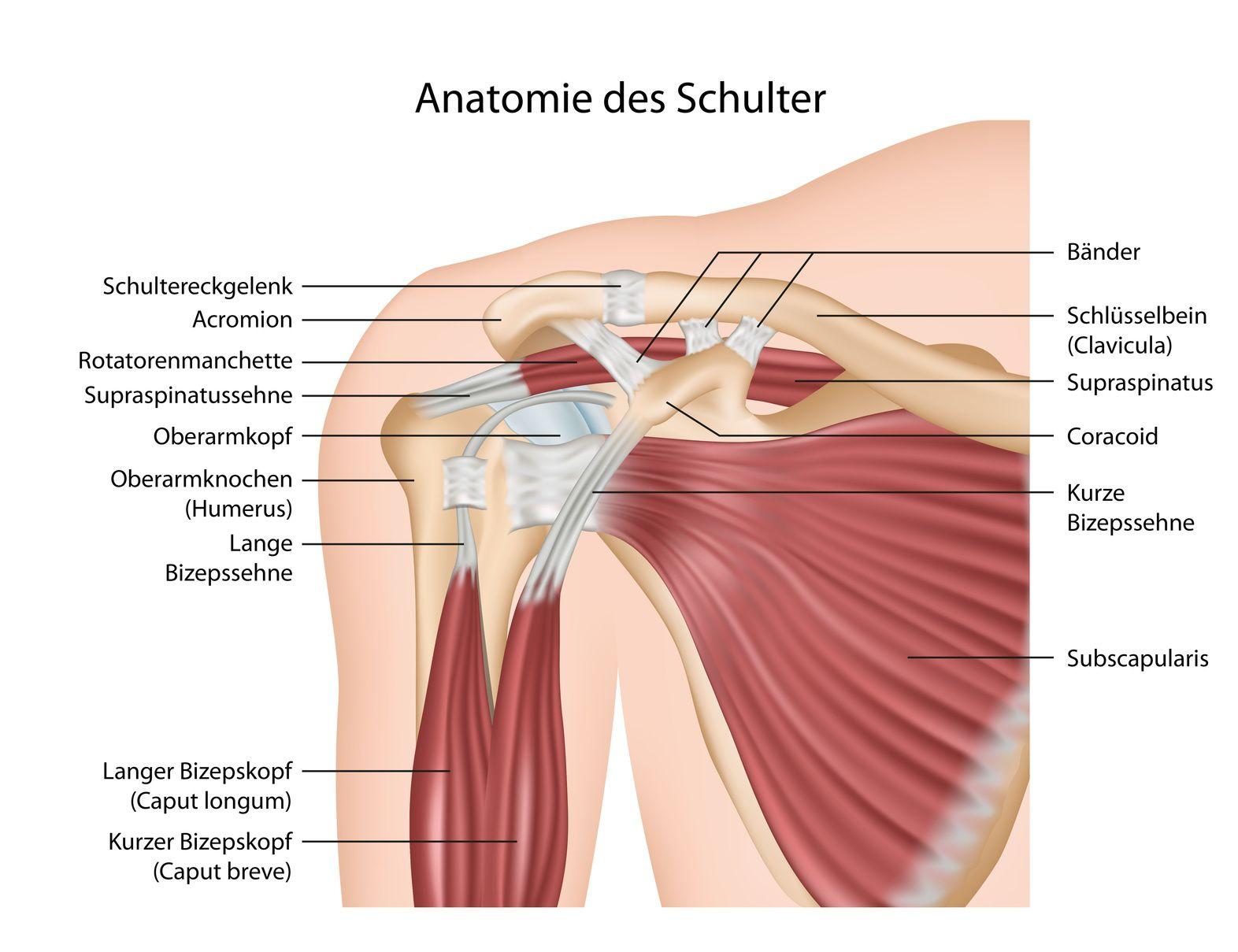 Schulterzentrum in der Praxisklinik Travemünde | Sternoclavicular ...