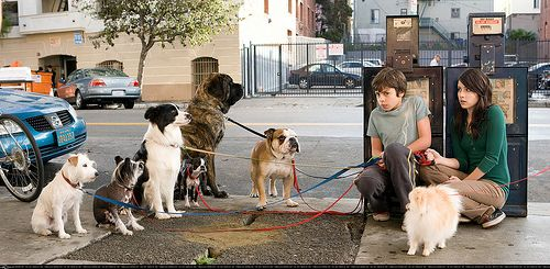 Hotel For Dogs Films Tv Pinterest Dog Hotel Dogs And Movies