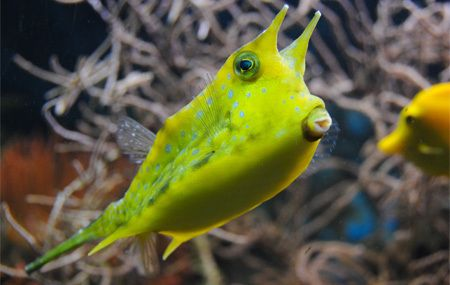 5 Animals That Look Like Cartoons Until They Kill You Fish Types Of Fish Animals
