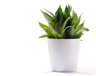 Homemade Fertilizers For House Plants