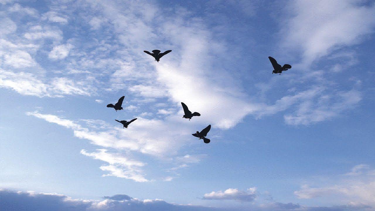 Sky Birds Live Wallpaper Android Apps On Google Play Birds Flying Birds Greenscreen