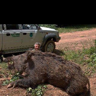 What a boar!