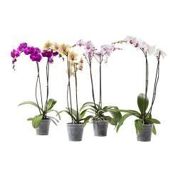 Piante - Portavasi e piante - IKEA