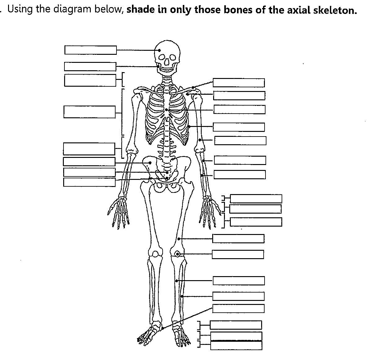 Unlabeled Diagram Of The Human Skeleton . Unlabeled