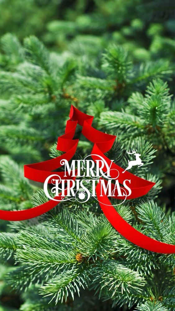 400+ Merry Christmas Wishes, Quotes and Messages