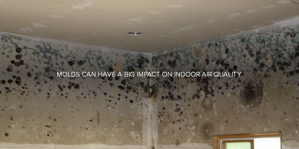 Mold Testing Inspection Denver Mold Removal Remediation