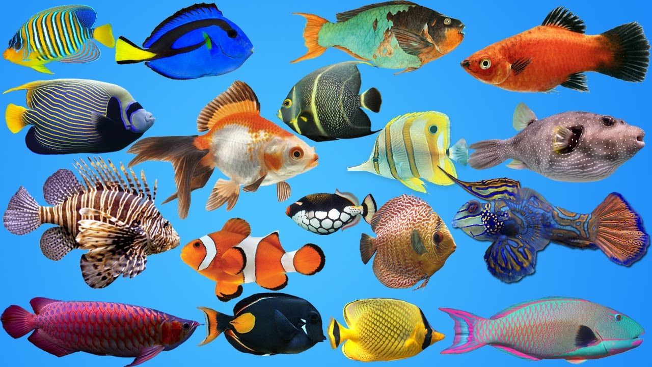 Fish for kids sea animals water pet for kids kids at for Fish for pets