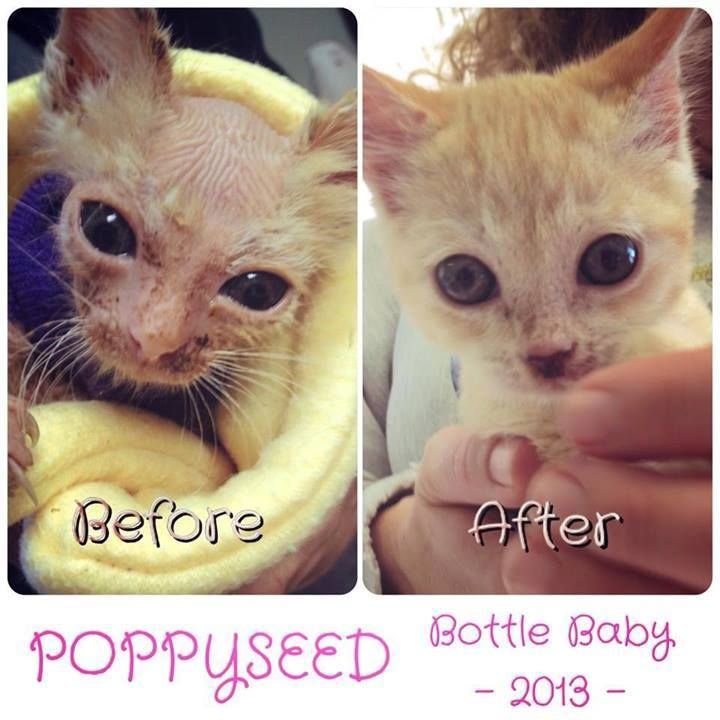 Search Baby Kittens Cat Care Animals
