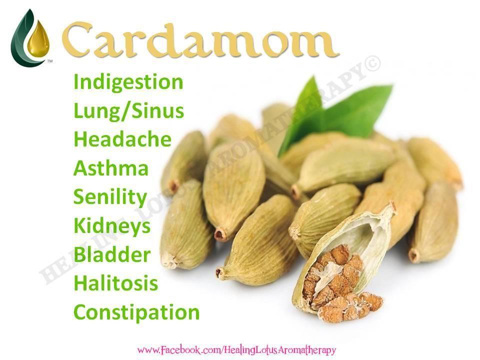 Cardamom Essential Oil Living Essentials Oils Essential Oil Benefits