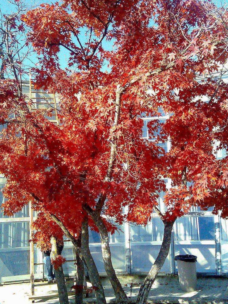 Autunno Fall Vacations Cherry Blossom Tree Blossom Trees