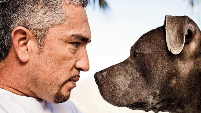 """Conductor on Twitter: """"Bringing your website to heel: #CesarMillan on #SEO & Web Presence Management https://t.co/Wo3tPDxLAc https://t.co/vZvkbYt2uC"""""""