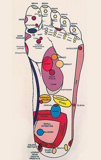 Reflexology Chart Laminated Reflexology Complimentary Therapy Reflexology Chart