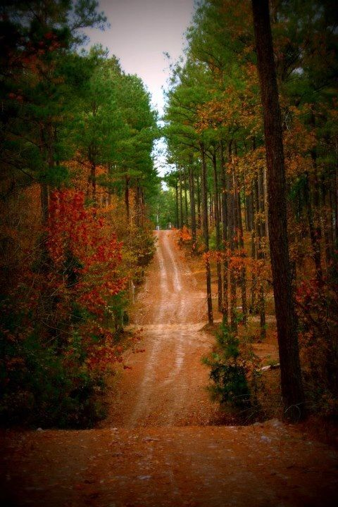 Arkansas Autumn Dirt Road Like The One We Lived On Red Clay Dw