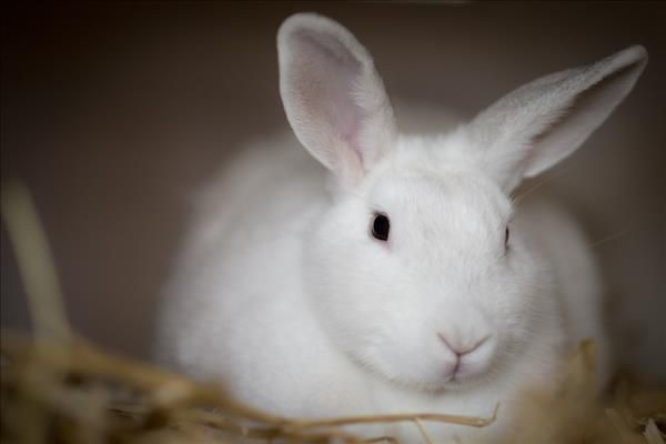 Beautiful Bunny Lilly Is Looking For Her Forever Home Please Contact The Nsw Rspca For More Details Adoption Pets Animals
