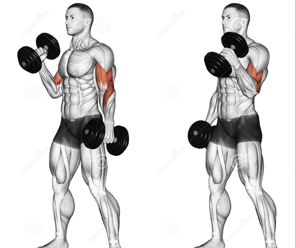 Muscle Building Training Exercises Biceps workout Dumbbell workout Dumbbell bicep workout