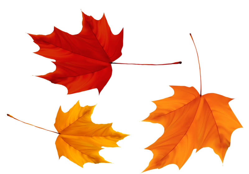 Red And Yellow Maple Leaves Png Image Maple Leaf Art Maple Leaf Leaf Art