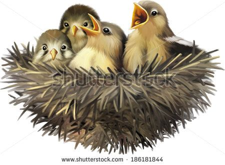 What Do Baby Sparrows Eat