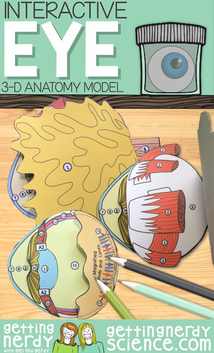 Try a paper dissection model before the real thing or in lieu of ...
