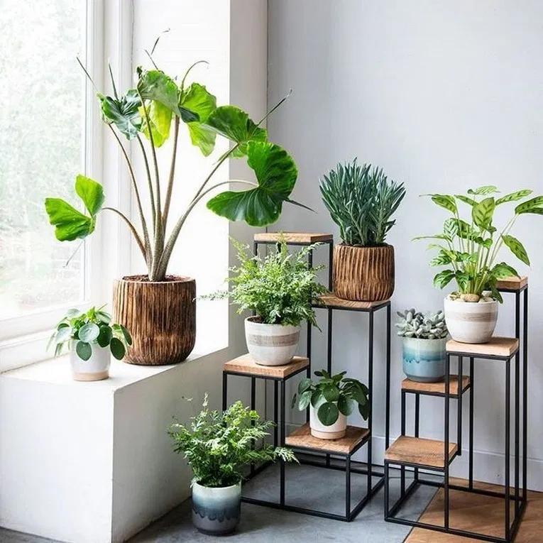 это, например, фото квартир с растениями недорого купить или