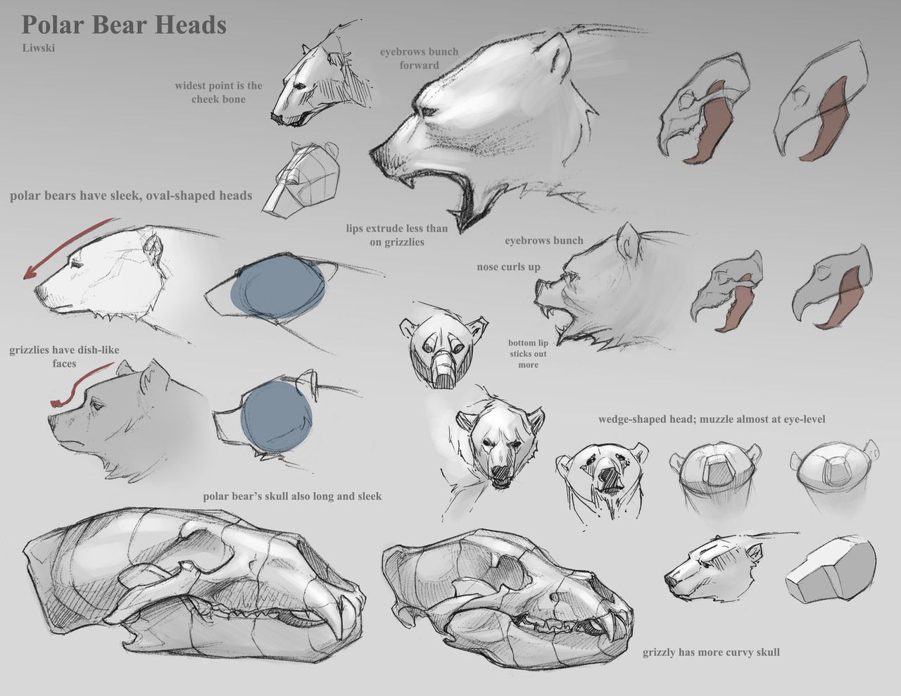 ✤ || CHARACTER DESIGN REFERENCES | animal anatomy | Pinterest ...