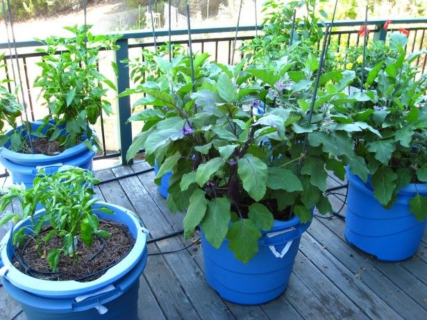 Vegetable Garden Containers Ideas: Garden & Landscaping, Cool Exterior Design With Container