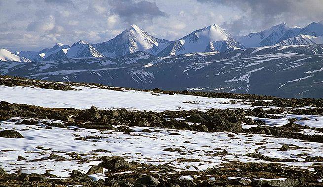 Principalmente este se encuentra en america del norte. Las tundra ...