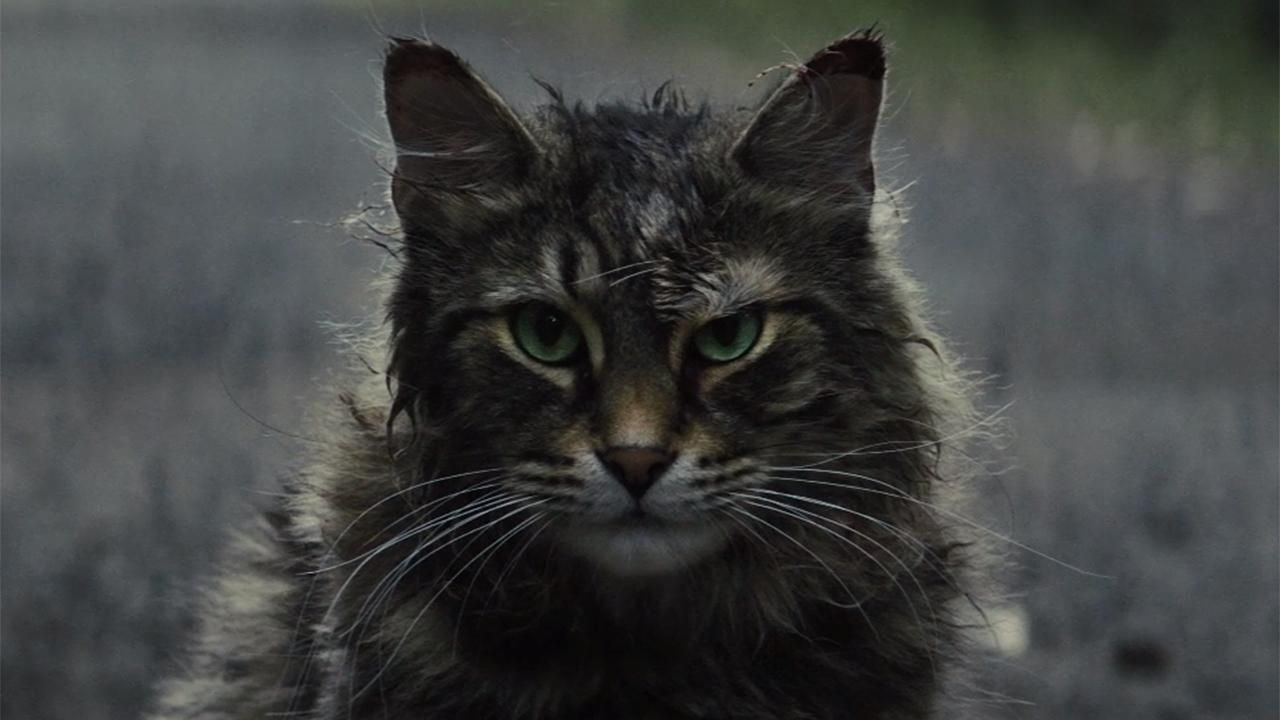 Fox News Pet Sematary Reboot Looks To Scare Audiences All Over