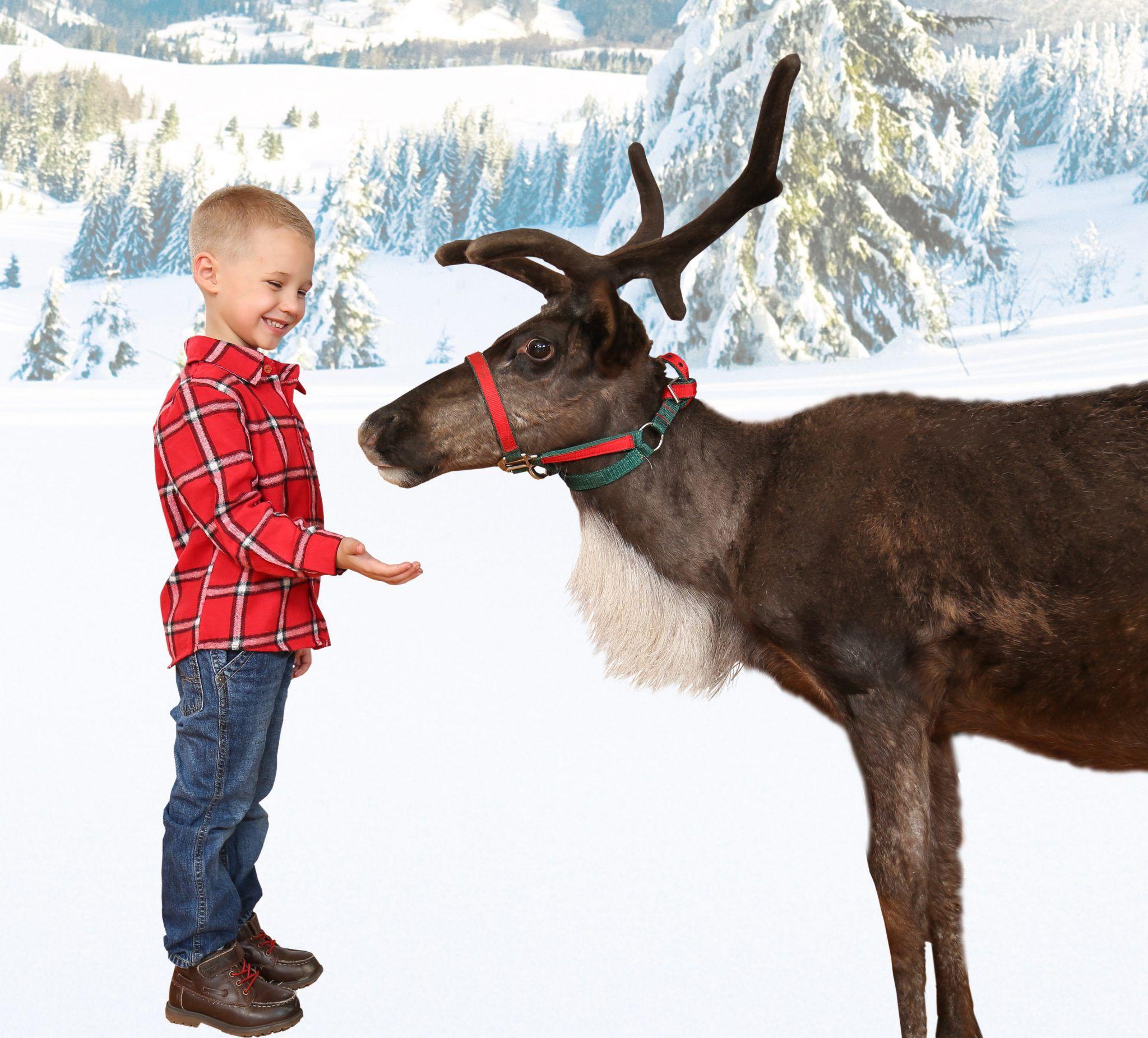 Drive Through Christmas Lights Promised Land Zoo Branson