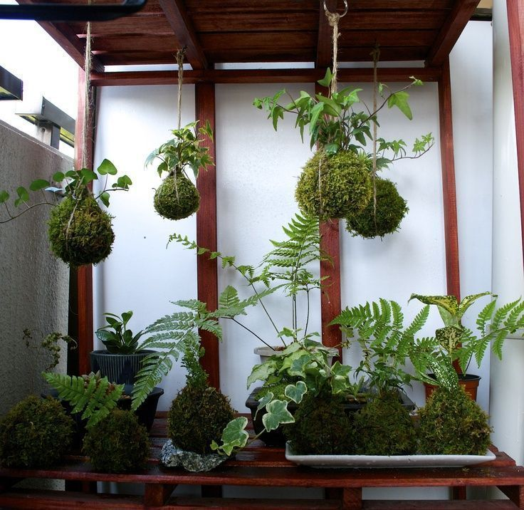 Japanese Balcony Garden   balcony hanging kokedama. 苔玉   Japan garden   Pint...#balcony #garden #hanging #japan #japanese #kokedama #pint #苔玉