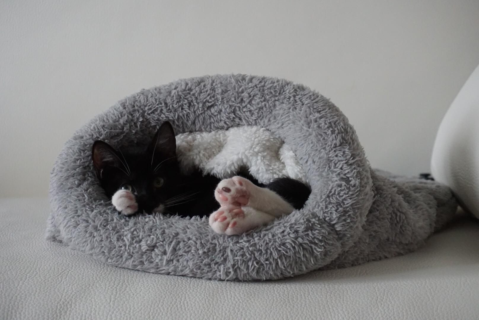 Pin By Meowmoe On Cute Cat Cute Cat Kittens Cutest Jersey Girl