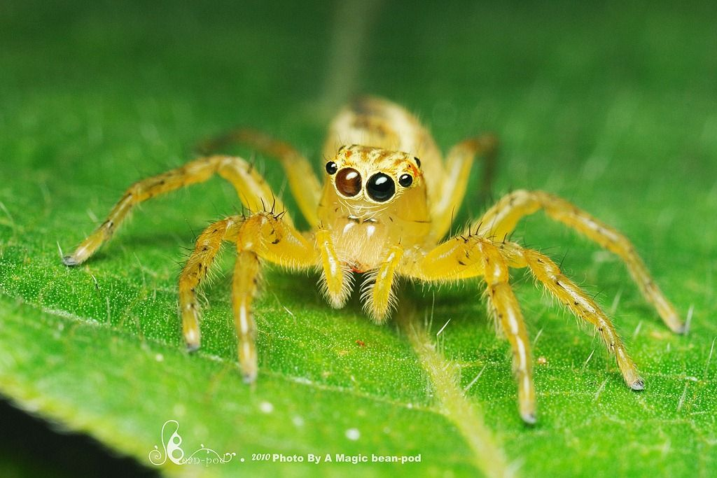 colorful Spiders | Colorful button spider HD Wallpaper