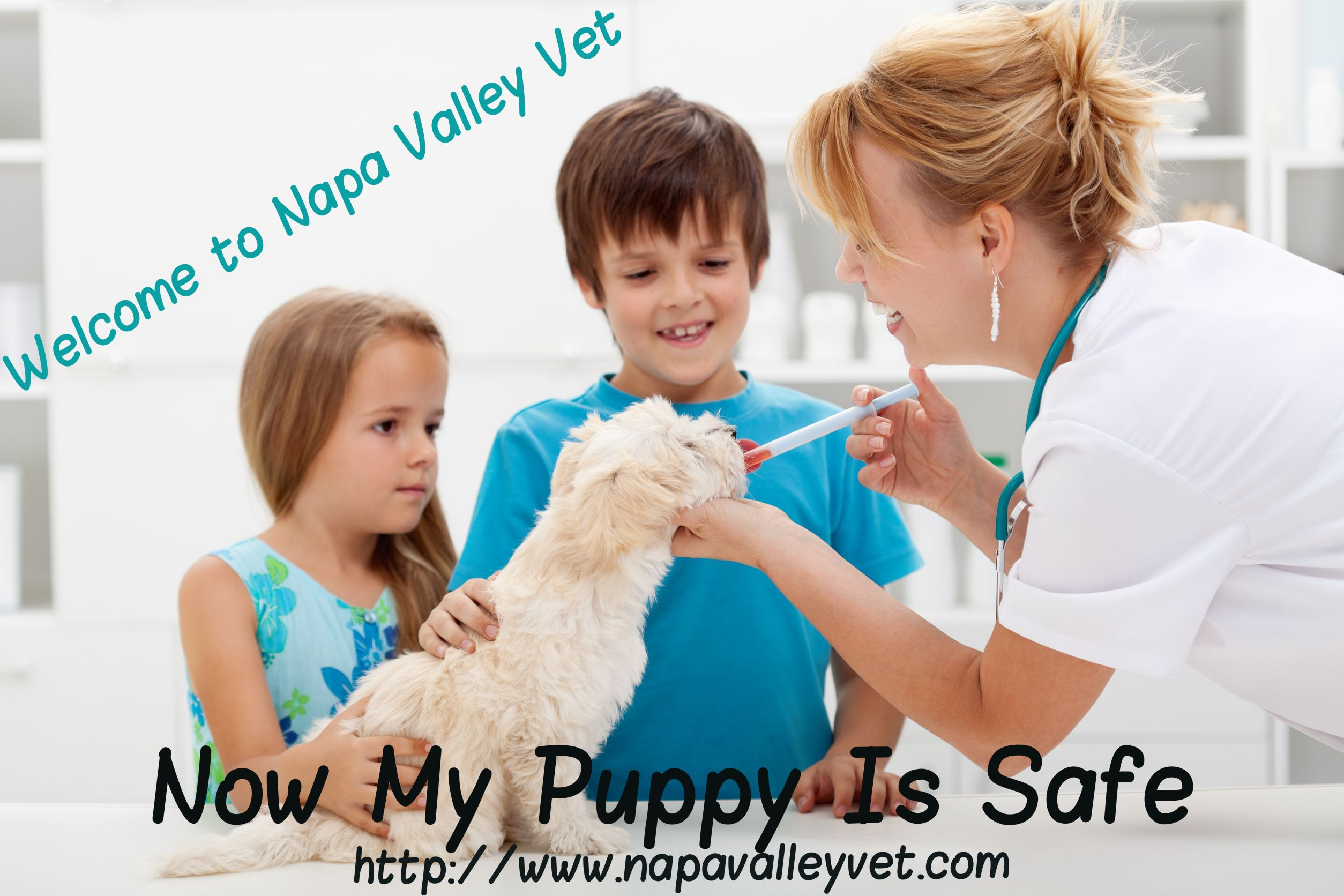 Our expert veterinarians provide complete dog and cat
