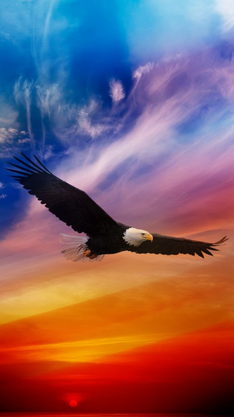 Flying Eagle Dramatic Sky iPhone 6 Wallpaper Bald eagle
