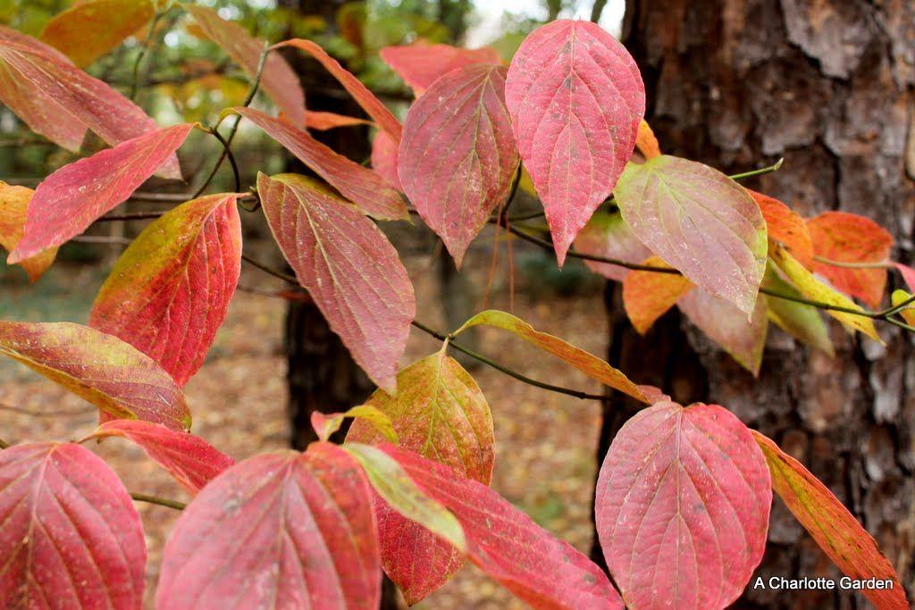 Pin on Autumn Trees