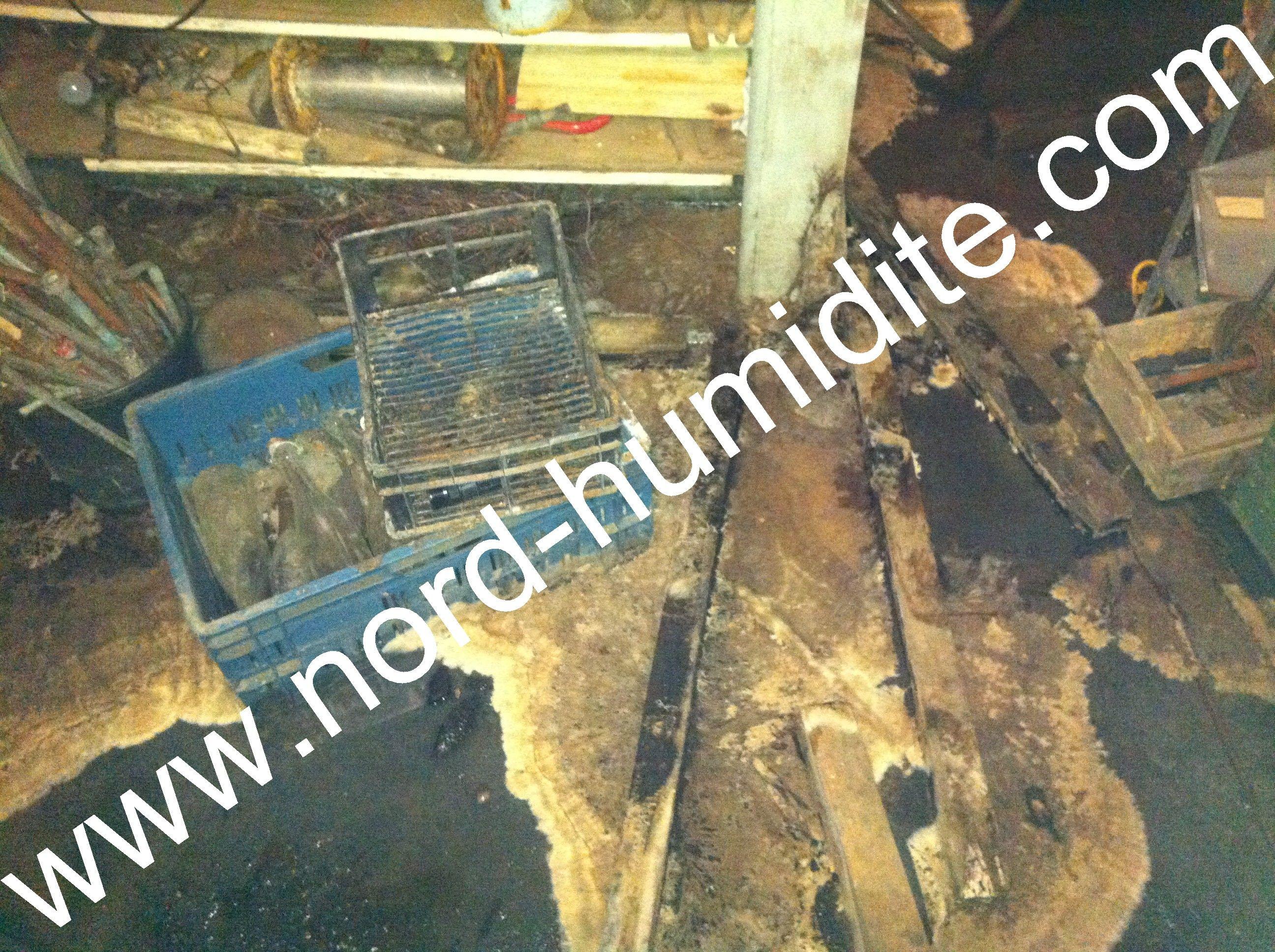 m rule champignon des caves champignon merule pinterest caves. Black Bedroom Furniture Sets. Home Design Ideas