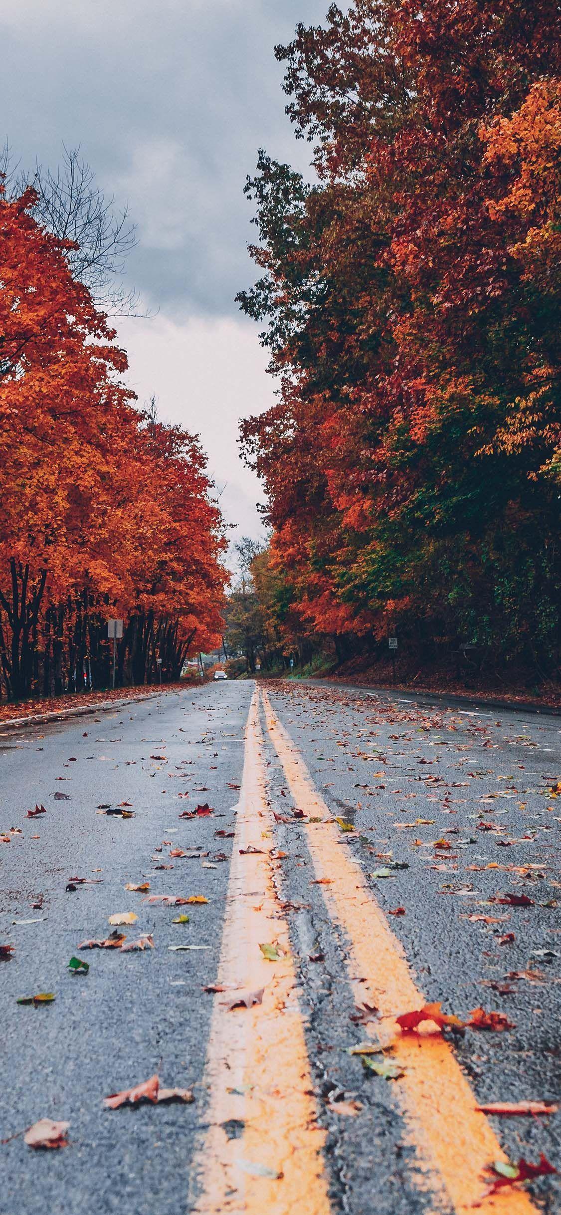 HerbstHintergründe für iPhone KOSTENLOSER Download
