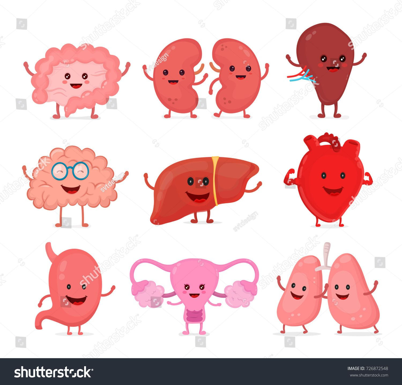 Cute Smiling Happy Human Healthy Strong Organs Set Vector Cartoon Character Illustration Icon Des Human Icon Cartoon Character Illustration Organ Illustration