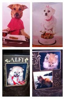 Andersens scrapperier: Matboksen til hunden vår Alfi