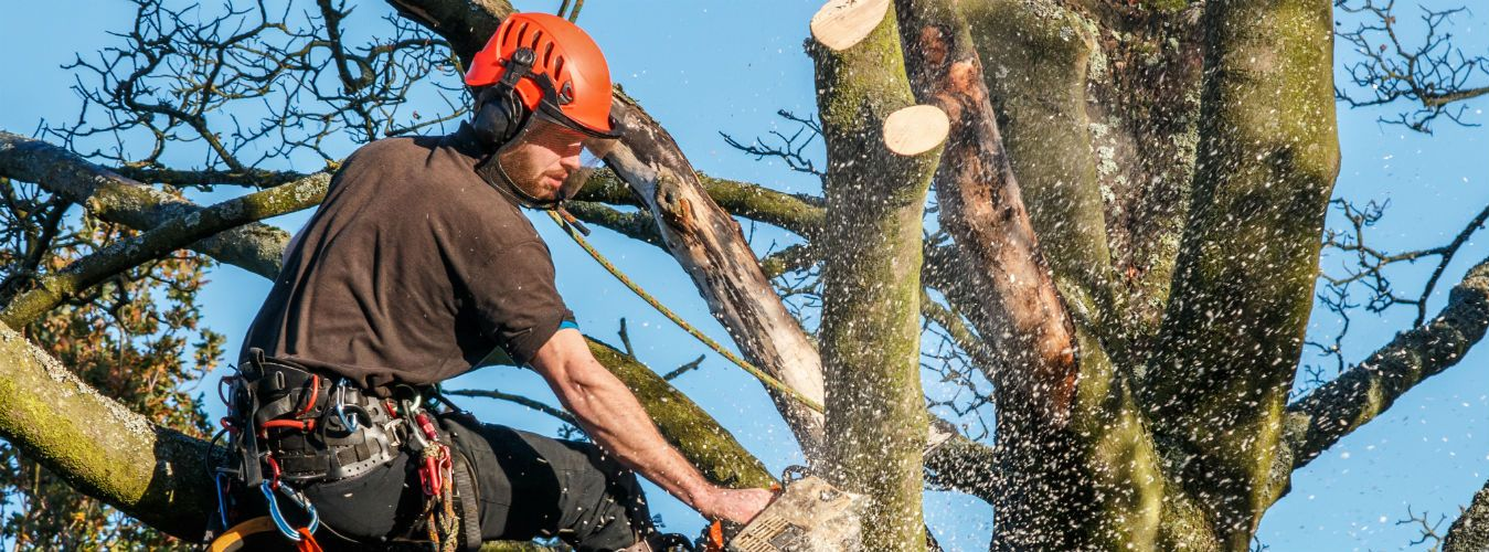 We offer emergency services, so when you need tree removal