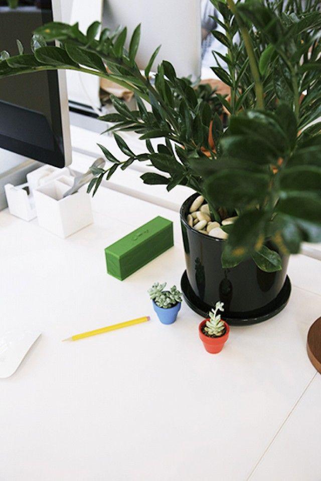 The Best Low Light Plants For Your Desk Desk Plants Office Plants Best Office Plants