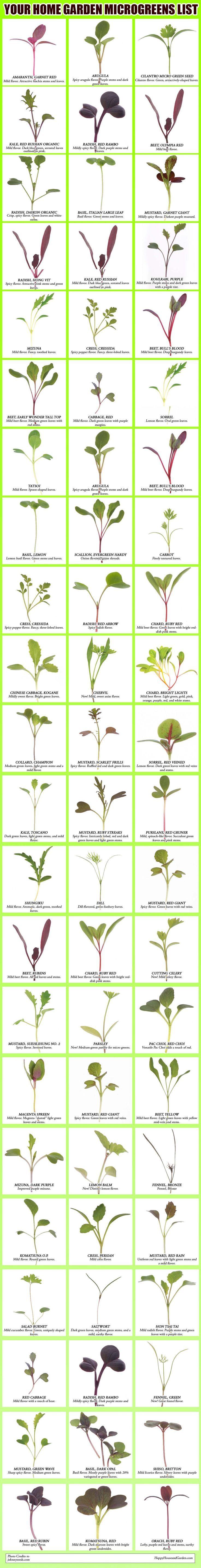 Your Home Garden Microgreens List